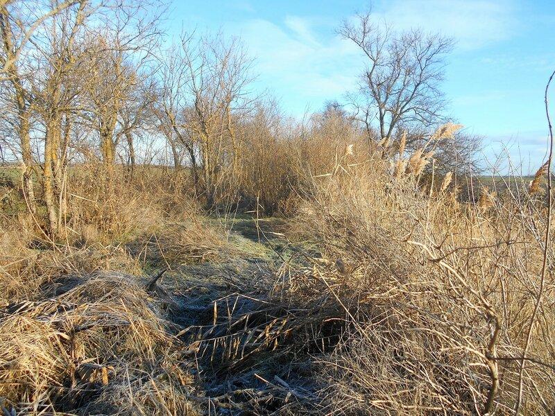 На Природе, в зимний день ... DSCN0397.JPG