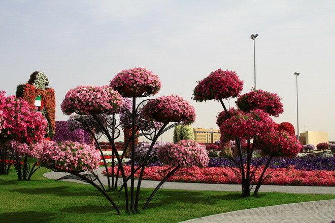 Парк цветов Dubai Miracle Garden. ОАЭ