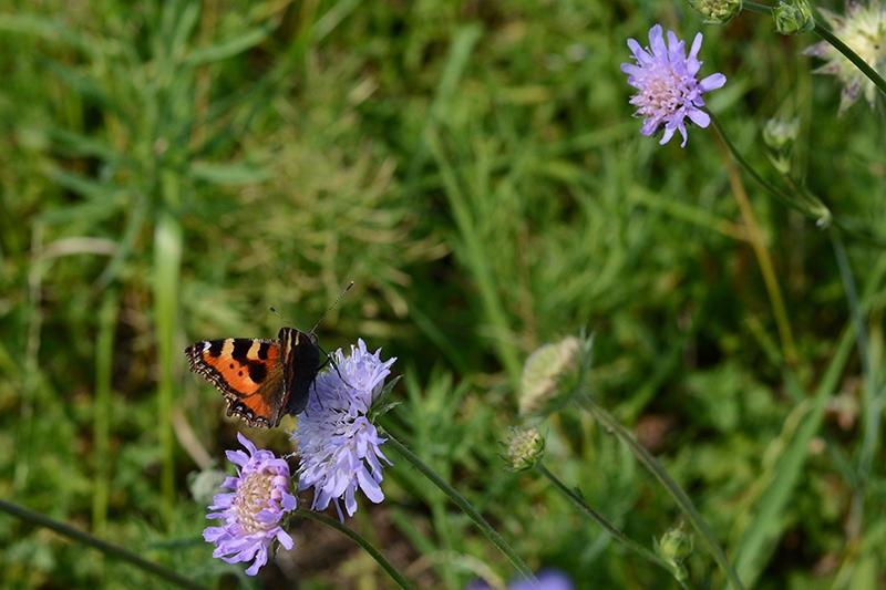 бабочки в полдень 2.jpg
