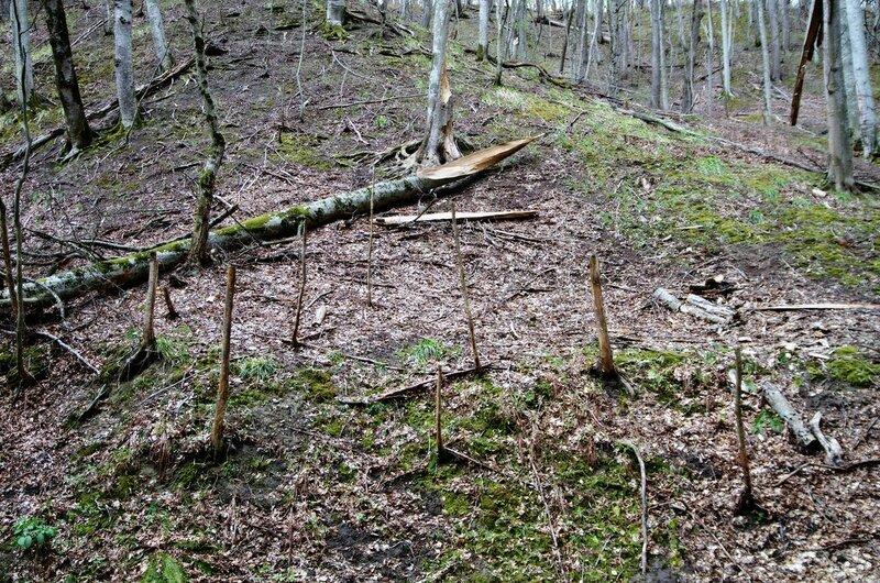 Лес без ветвей