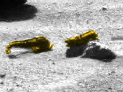 Уфологи обнаружили скорпиона и креветку на Марсе