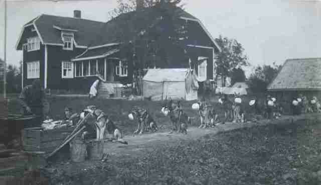 Очередь пограничных собак за обедом. Финляндия (до 1940–го), школа–питомник пограничных собак в Сальми..jpg