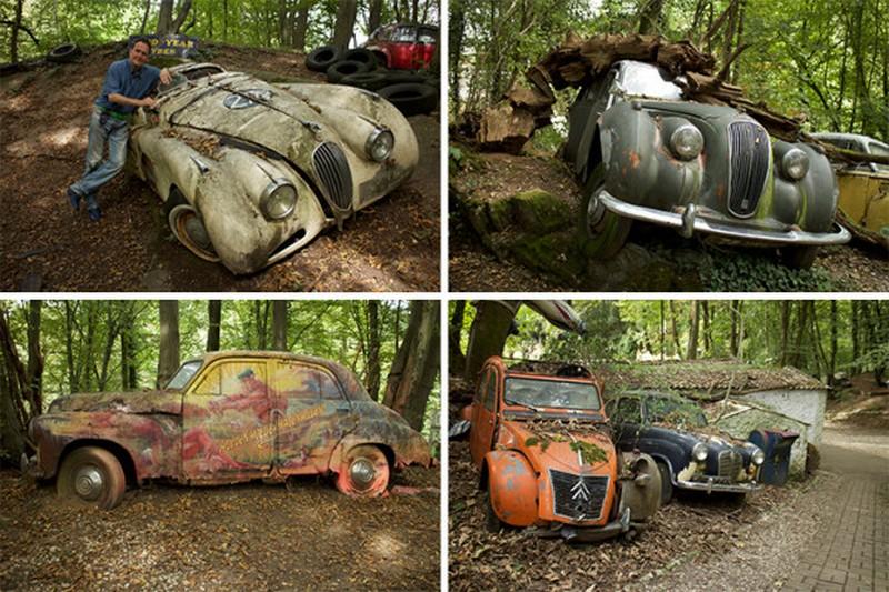 50 старинных автомобилей в лесу
