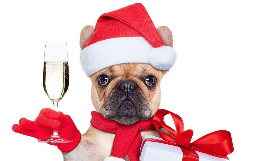 Новый год Карнавал Собак