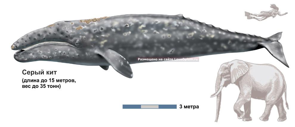 Лагуны представляют собой морские парки, охраняемые государством, поэтому для наблюдения за кит