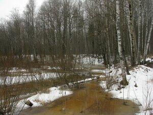 14 марта-2 апреля 2016-СПб и Всеволожский р-онВесна в этом году у нас ранняя. Снег в городе сошел еще в марте, а в лесу он стремительно тает. Еще в середине марта можно было обнаружить первые весенние грибы, а тепло в конце месяца, похоже, заметно ускорило их появление. В лесу уже довольно интересно, что в это время бывает далеко не всегда. Конечно, вне конкуренции сейчас разнообразные аскомицеты, а со свежими пластинчатыми, наверное, придется подождать еще несколько недель. Тут все как обычно. Строчки - сморчки корзинками, скорее всего, можно будет собирать уже в апреле, погода вроде бы способствует этому. Короче говоря, замечательное время наступает, вот только клещики, вероятно, скоро тоже начнут охоту...
