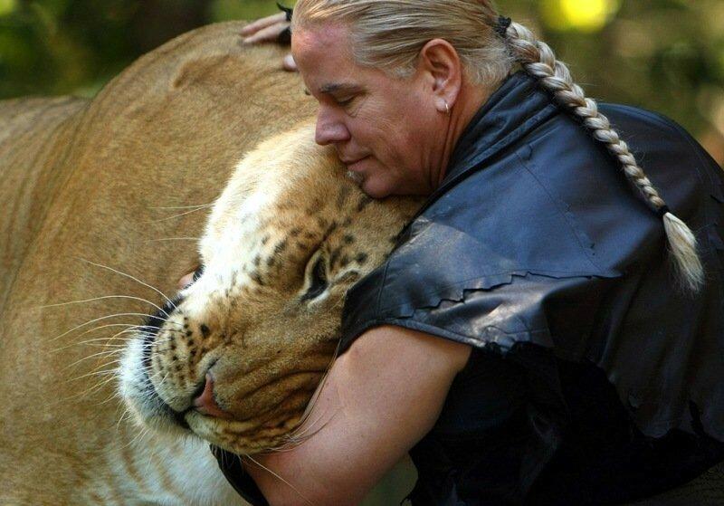 Как понять, что вы находитесь в мире животных: 41 фотография