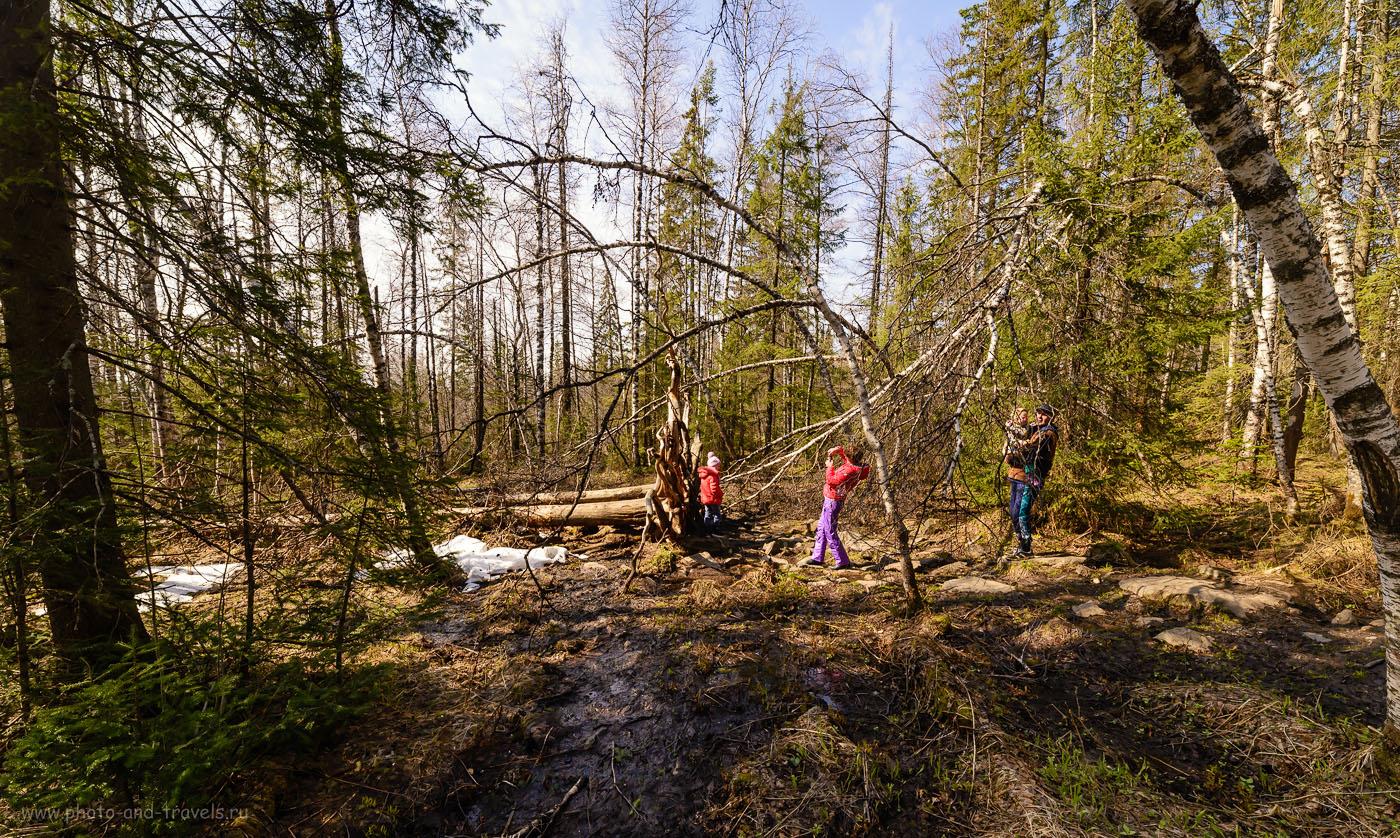 Фото 14. Многие туристы останавливаются для фотосессии в дремучем лесу. По пути к вершине вы увидите множество поваленных ураганами могучих деревьев. 1/400, -1.67, 9.0, 400, 14.