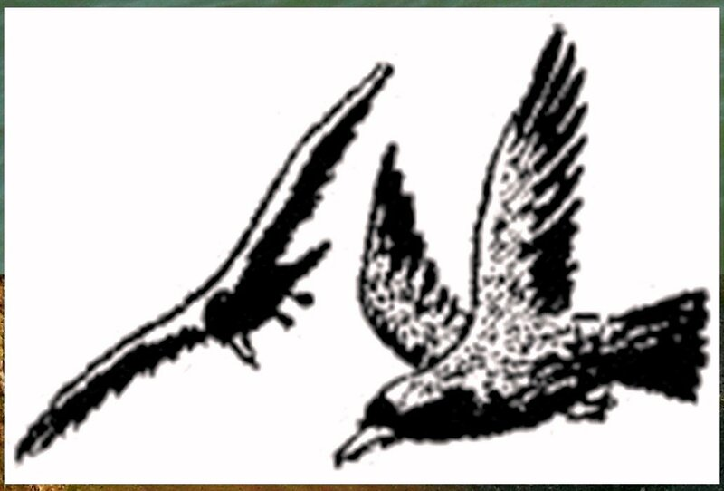 Иллюстрация к книге В.К.Арсеньева Дерсу Узала (19).jpg