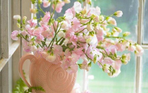 cvety_na_okne_1920x1200.jpg
