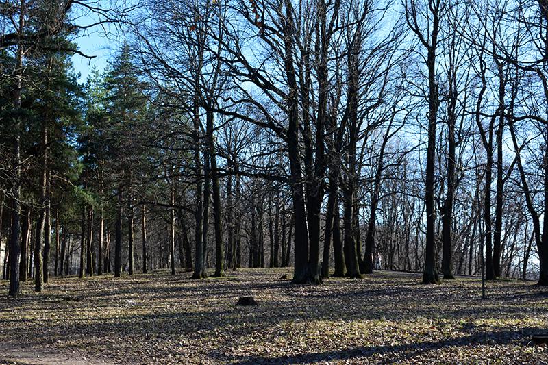 парк в апреле роща.jpg