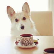 Завтрак для пса