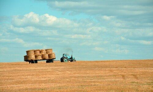 Сельское хозяйство Молдовы показало прирост производства в 19%