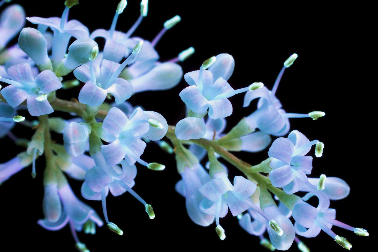 Светящиеся цветы / фото Craig Burrows