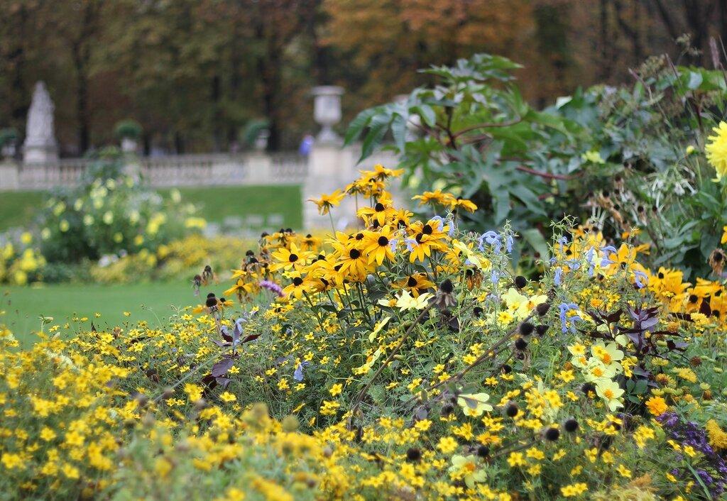 Luxembourg Garden in autumn