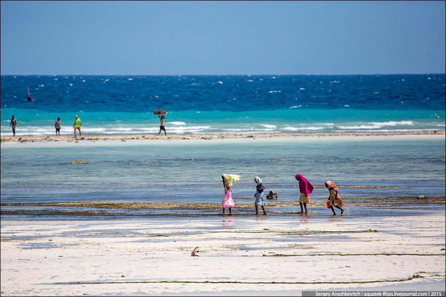 1. С каждым отливом каменистые берега Занзибара и окрестных островов покрываются всеми цветами радуг