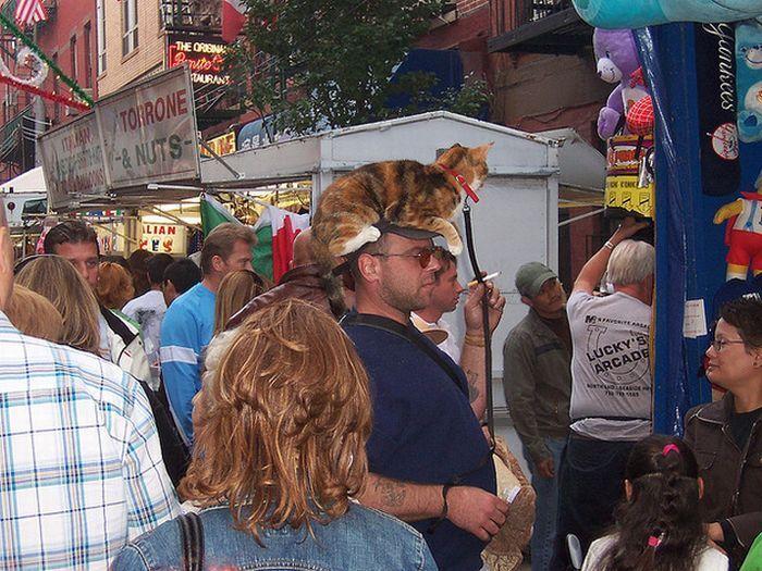 Коты на человеческих головах (40 фото)