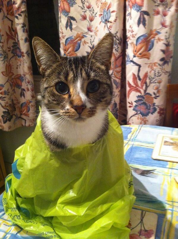 Просто коты очень любят пакеты.