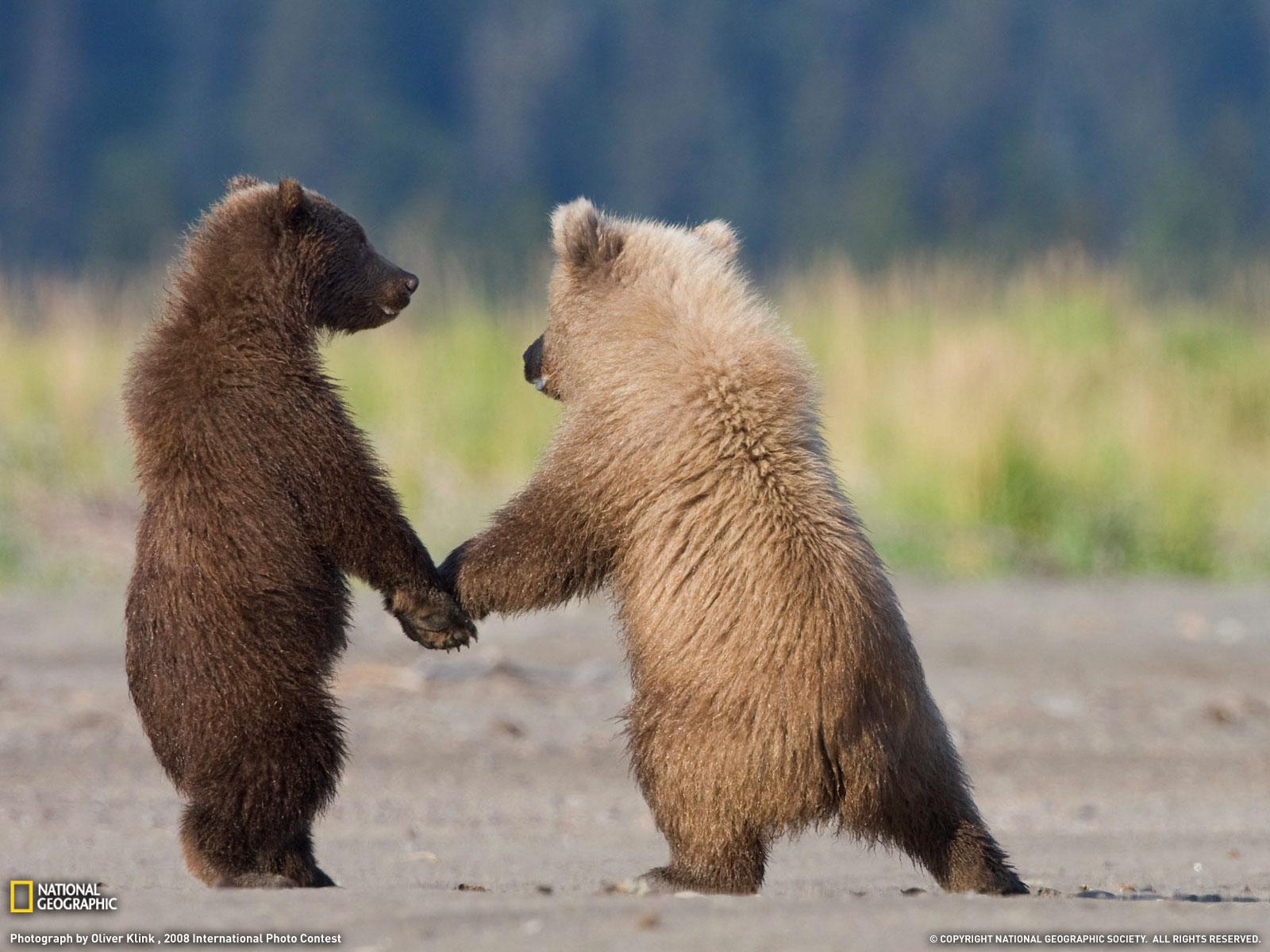 Животные от National Geographic.