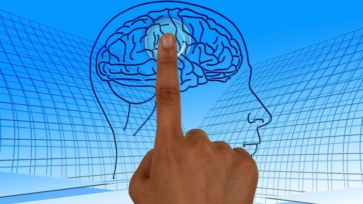 Иммунные клетки мозга зажизнь обновляются 6 раз— Ученые