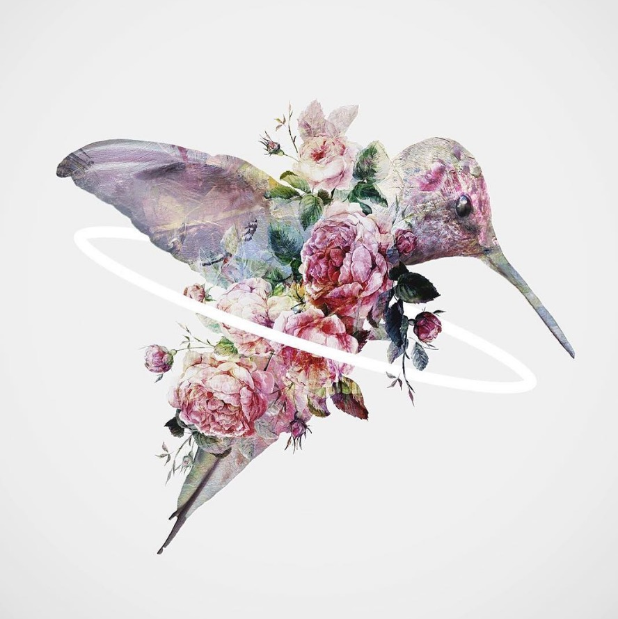 Flowery Birds Illustrations