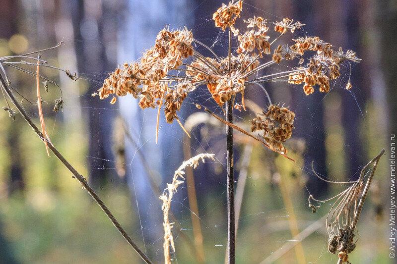 растение запутанное в паутине
