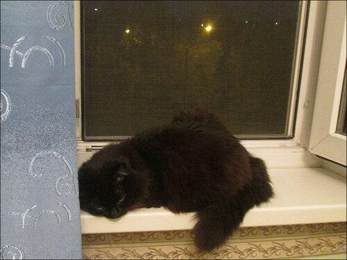 Кошка-на-окошке.jpg
