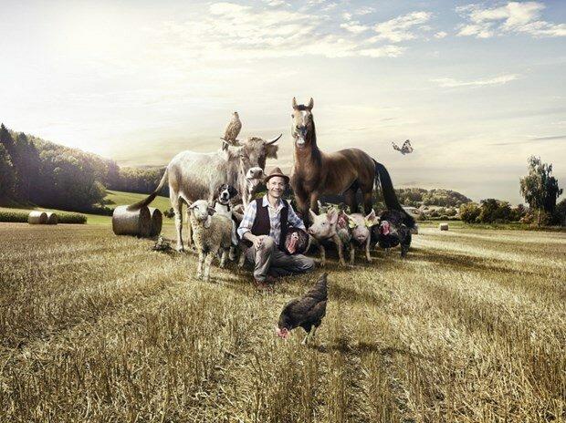 Креативная рекламная кампания Braun решила причесать зверей