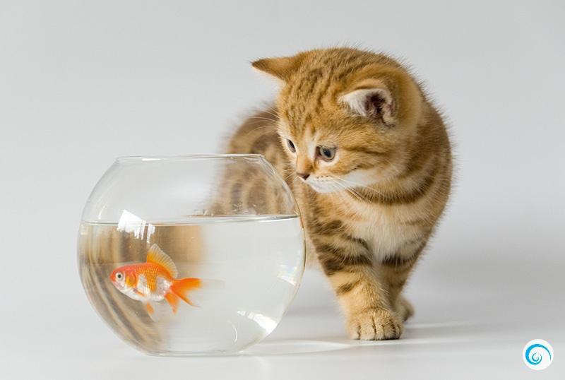 картинки кошек собак рыбок сухого или