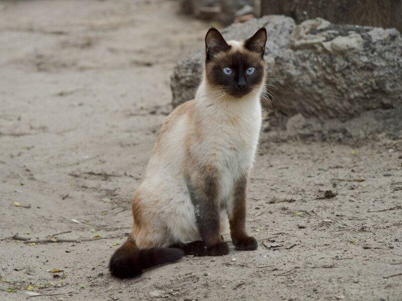 Апрельский кошатик