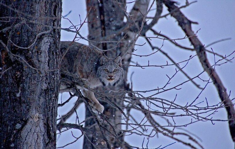 Взгляд охотника