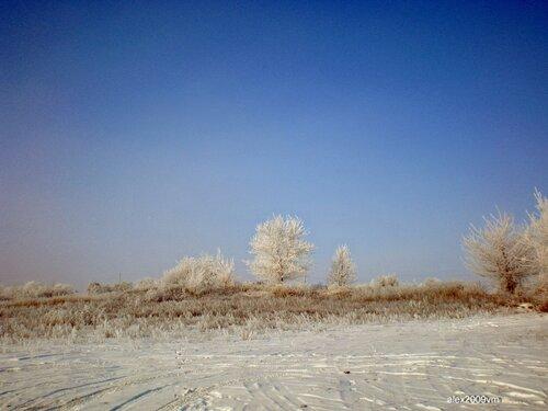 Зимний этюд. Деревья
