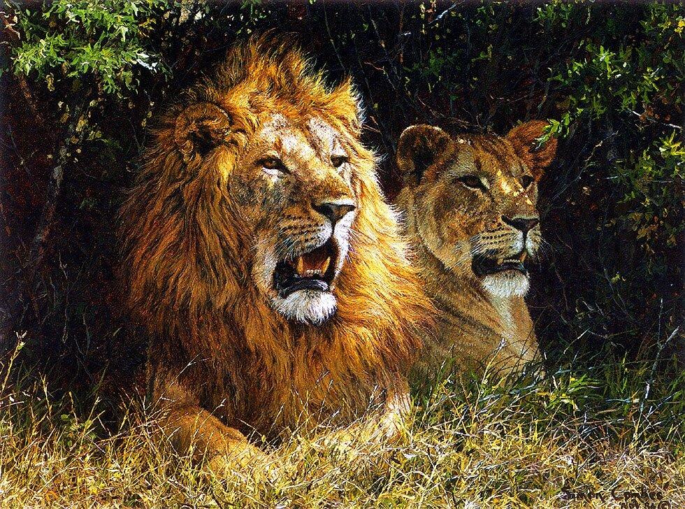 джакарты картины со львами фото кухонную мебель технику
