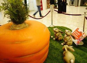 Посадили зайцы морковку...