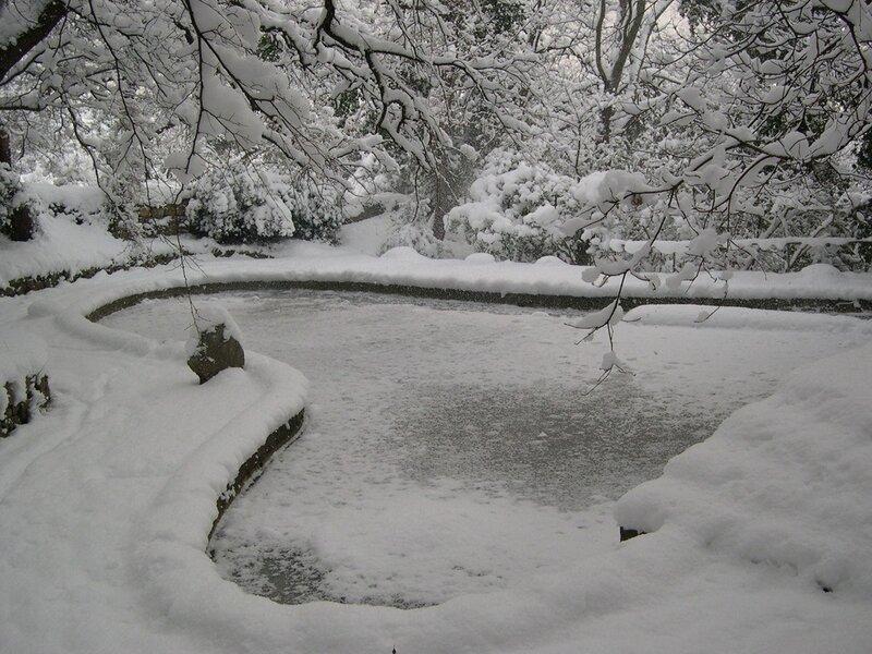 Никитский ботанический сад. Зимние этюды