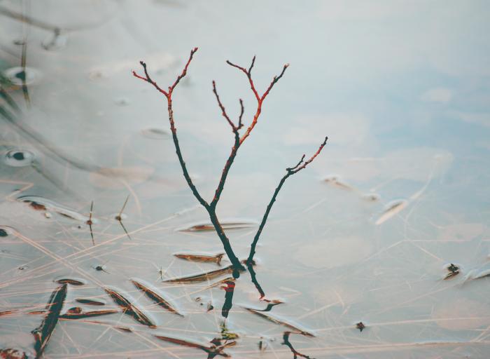 красная ветка в воде