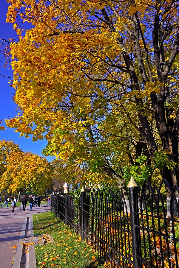 Золотая осень в Царицино