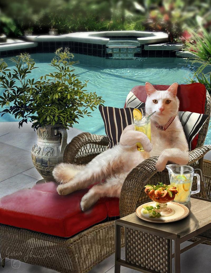Зима картинки, с отпуском картинки прикольные с кошками