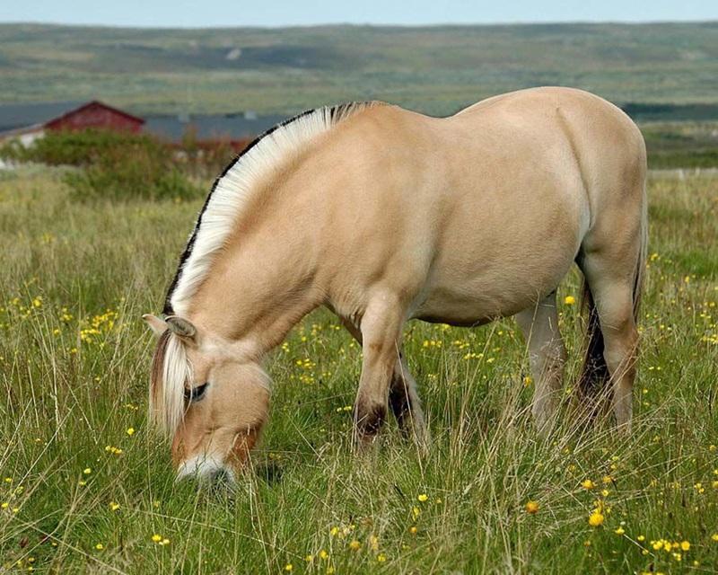 Красивые фотографии природы Норвегии разных авторов 0 ff109 ec893aad orig