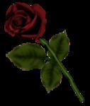 «p.s-iloveyou» 0_7d53a_2a9acd5c_S