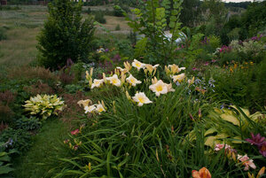 Лилейники в Саду Дракона летом 2011г 0_63743_15d57611_M