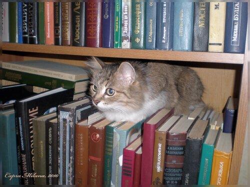 в библиотеке как дома