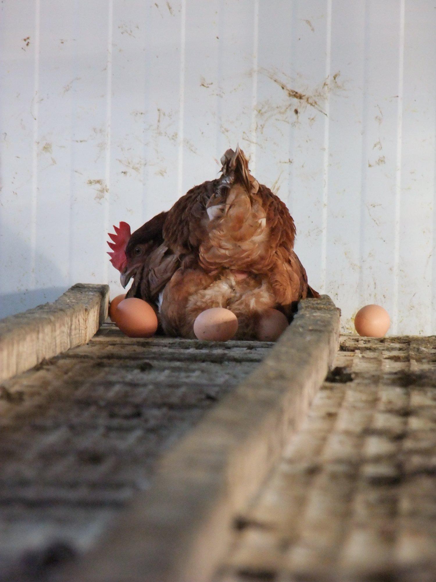 пощупать яйца между ног