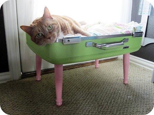 Кровать из старого чемодана.  Кровать для кошки.  0_4c583_c19cd469_L