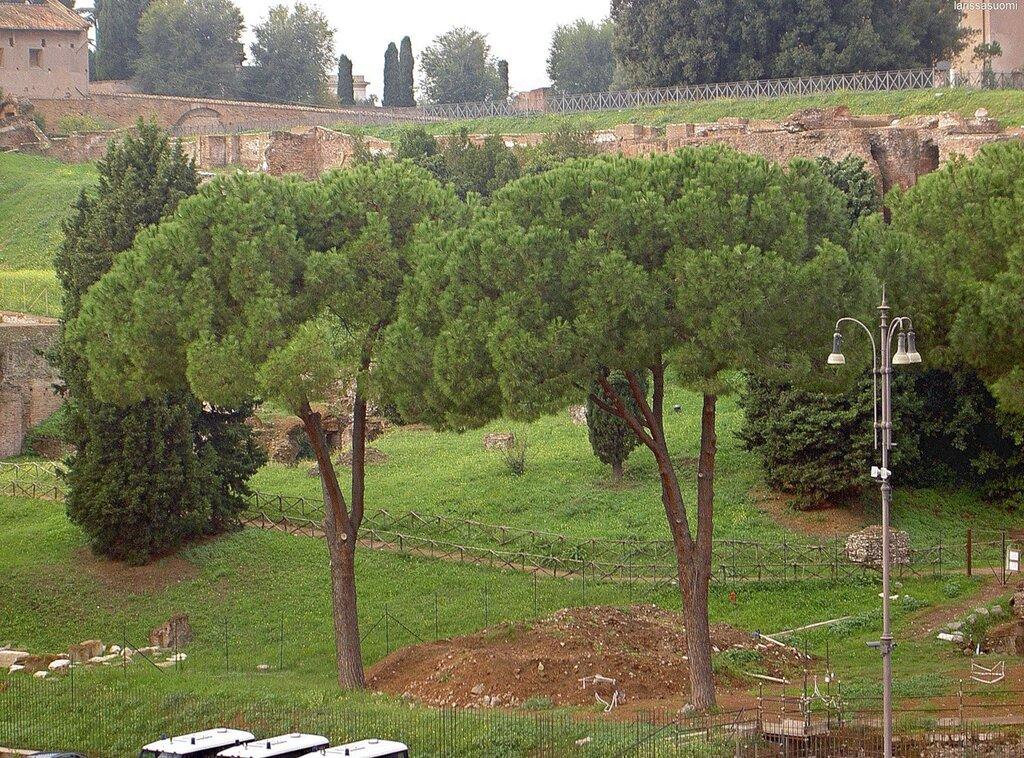 Вид на Римкие фофрумы с Колизея.