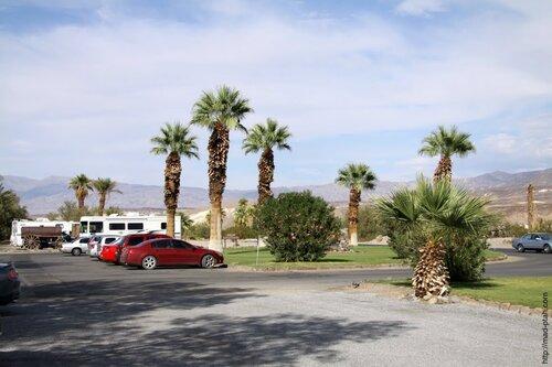 пальмы в штате Невада