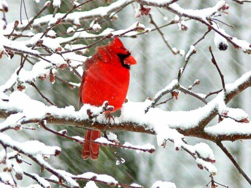 Подборка красивых фотографий леса зимой.  Вы не можете скачивать файлы с нашего сервера.