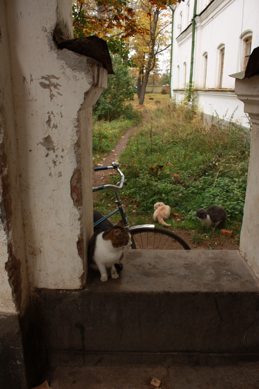 Коты у входа в гостинницу.