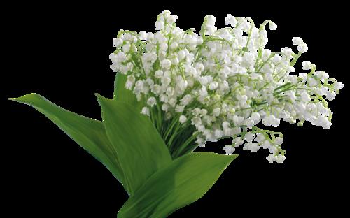 Beyaz kır çiçekleri png uzantılı doğadan beyaz kır