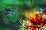 ...collection background Other nature wallpaper and bright flowers...